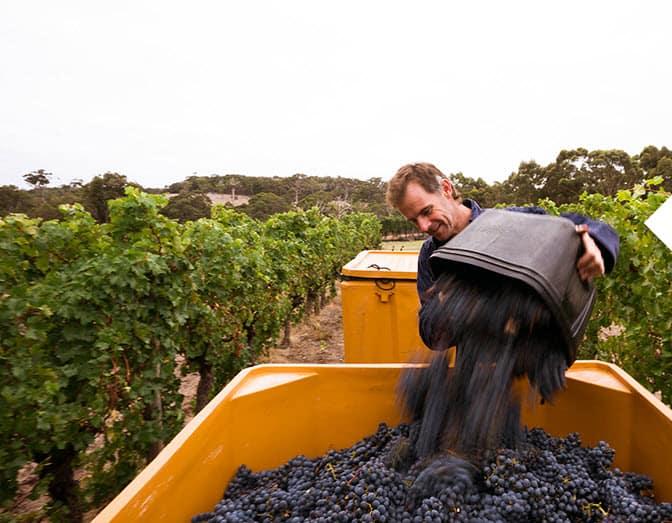 vassefelix winery